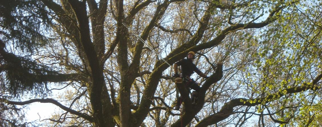 abattage treeside